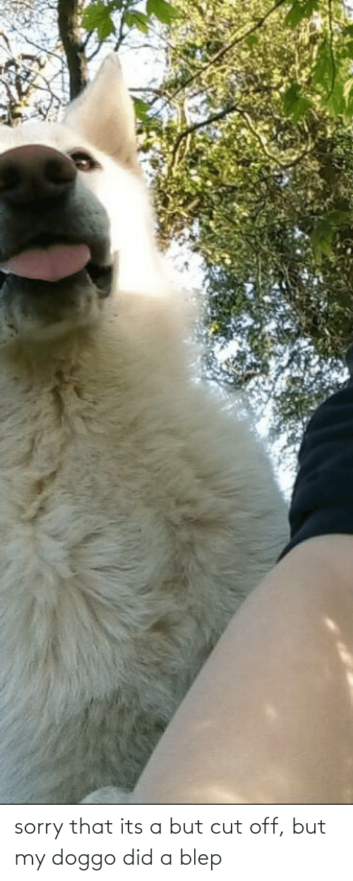 Aww Memes: sorry that its a but cut off, but my doggo did a blep