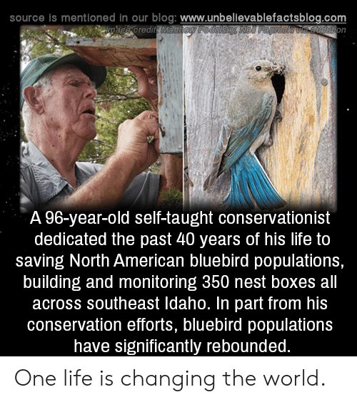 Nest: source is mentioned in our blog: www.unbellevablefactsblog.com  A 96-year-old self-taught conservationist  dedicated the past 40 years of his life to  saving North American bluebird populations,  building and monitoring 350 nest boxes all  across southeast Idaho. In part from his  conservation efforts, bluebird populations  have significantly rebounded One life is changing the world.