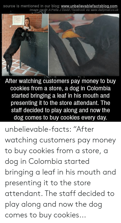 "Colombia: source is mentioned in our  blog: www.unbellevablefactsblog.com  Image credit: A Peña J David/facebook via www.dailymail.co.uk  After watching customers pay money to buy  cookies from a store, a dog in Colombia  started bringing a leaf in his mouth and  presenting it to the store attendant. The  staff decided to play along and now the  dog comes to buy cookies every day. unbelievable-facts: ""After watching customers pay money to buy cookies from a store, a dog in Colombia started bringing a leaf in his mouth and presenting it to the store attendant. The staff decided to play along and now the dog comes to buy cookies..."