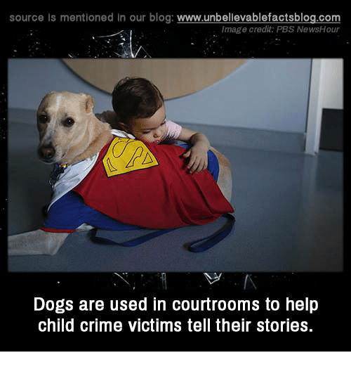 Criming: source Is mentioned in our blog: www.unbellevablefactsblog.com  Image credit: PBS NewsHour  Dogs are used in courtrooms to help  child crime victims tell their stories