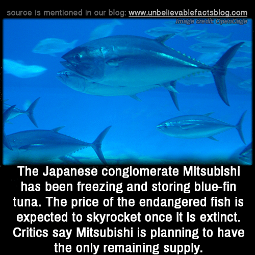 Memes, Blog, and Blue: source is mentioned in our blog: www.unbellevablefactsblog.com  The Japanese conglomerate Mitsubishi  has been freezing and storing blue-fin  tuna. The price of the endangered fish is  expected to skyrocket once it is extinct.  Critics say Mitsubishi is planning to have  the only remaining supply.