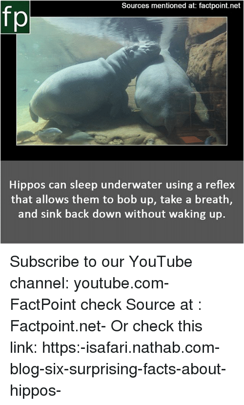 hippos: Sources mentioned at: factpoint.net  fp  Hippos can sleep underwater using a reflex  that allows them to bob up, take a breath,  and sink back down without waking up. Subscribe to our YouTube channel: youtube.com-FactPoint check Source at : Factpoint.net- Or check this link: https:-isafari.nathab.com-blog-six-surprising-facts-about-hippos-