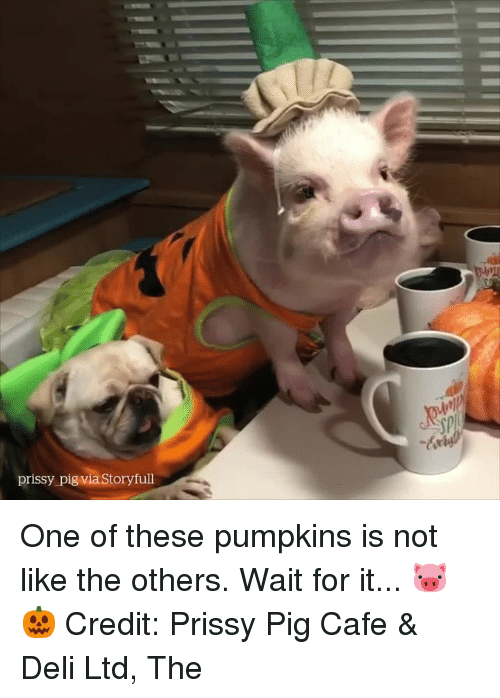 The Others, Pig, and One: sp  prissy pig via Storyfull One of these pumpkins is not like the others. Wait for it... 🐷🎃  Credit: Prissy Pig Cafe & Deli Ltd, The