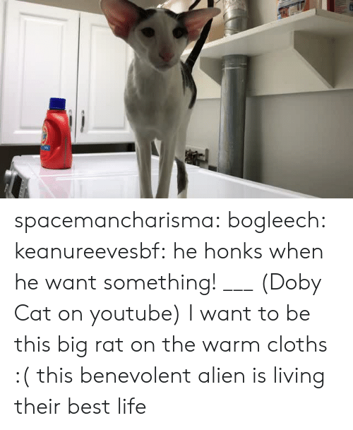 Life, Target, and Tumblr: spacemancharisma: bogleech:  keanureevesbf: he honks when he want something! ___ (Doby Cat on youtube) I want to be this big rat on the warm cloths :(   this benevolent alien is living their best life