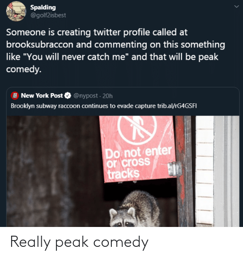 """spalding: Spalding  @golf2isbest  Someone is creating twitter profile called at  brooksubraccon and commenting on this something  like """"You will never catch me"""" and that will be peak  comedy.  New York Post O @nypost · 20h  Brooklyn subway raccoon continues to evade capture trib.al/rG4GSFI  Do not enter  or cross  tracks Really peak comedy"""