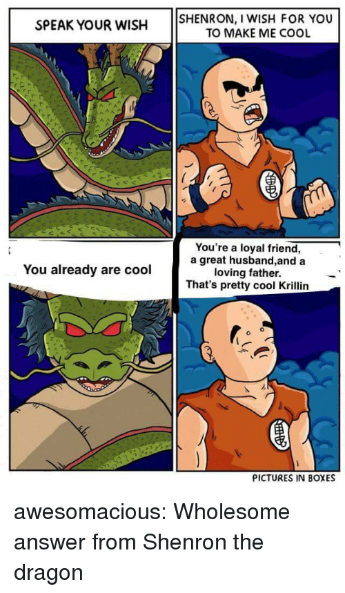 Tumblr, Krillin, and Blog: SPEAK YOUR WISH SHENRON, I WISH FOR YOU  TO MAKE ME COOL  You're a loyal friend,  a great husband,and a  loving father.  That's pretty cool Krillin  You already are cool  PICTURES IN BOXES awesomacious:  Wholesome answer from Shenron the dragon
