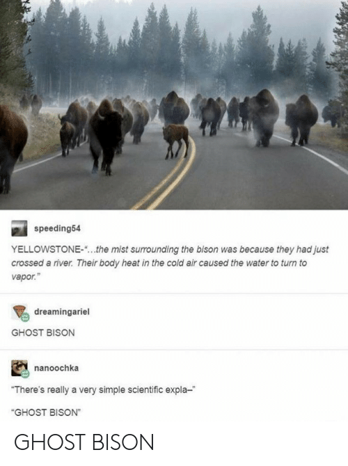 """Ghost, Heat, and Water: speeding54  YELLOWSTONE-  the mist surrounding the bison was because they had just  crossed a river. Their body heat in the cold air caused the water to turn to  vapor.""""  dreamingariel  GHOST BISON  nanoochka  """"There's really a very simple scientific expla-  """"GHOST BISON"""" GHOST BISON"""