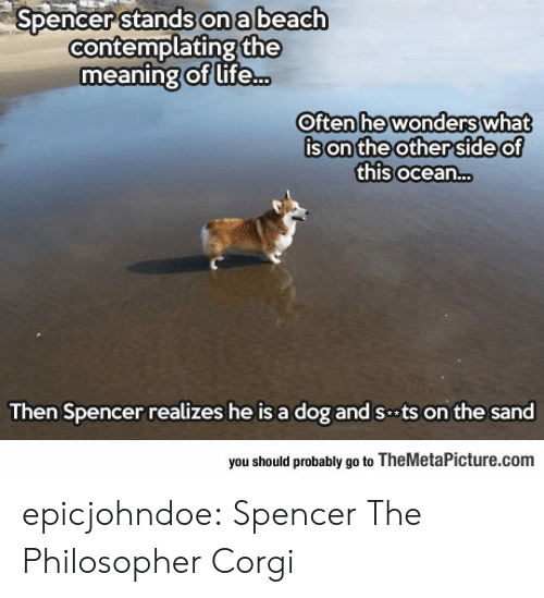 Spencer: Spencer stands on a beach  contemplating the  meaning of life...  Often he wonders  Often hewonderswhat  son'the other 'Side o  this ocean...  of  Ce  Then Spencer realizes he is a dog and sts on the sand  you should probably go to TheMetaPicture.com epicjohndoe:  Spencer The Philosopher Corgi