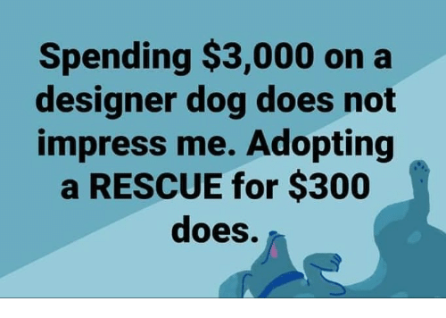 Memes, 🤖, and Dog: Spending $3,000 on a  designer dog does not  impress me. Adopting  a RESCUE for $300  does.