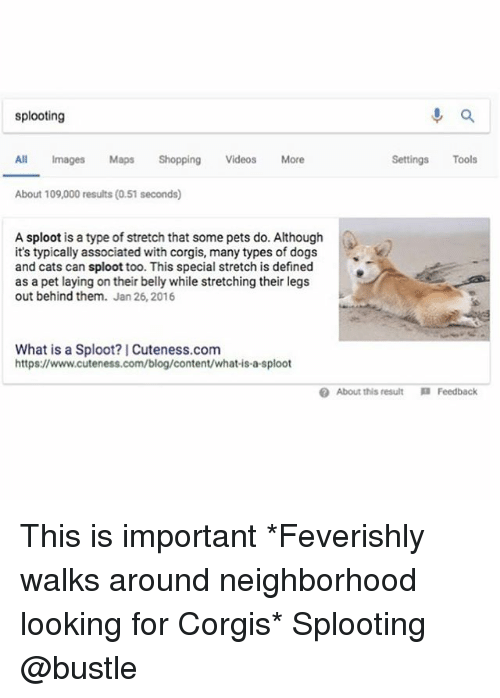 Cats, Dogs, and Memes: splooting  All Images Maps ShoppingVideos More  Settings Tools  About 109,000 results (0.51 seconds)  A sploot is a type of stretch that some pets do. Although  it's typically associated with corgis, many types of dogs  and cats can sploot too. This special stretch is defined  as a pet laying on their belly while stretching their legs  out behind them. Jan 26, 2016  What is a Sploot? Cuteness.com  https://www.cuteness.com/blog/content/what-is-a-sploot  About this result  Feedback This is important *Feverishly walks around neighborhood looking for Corgis* Splooting @bustle