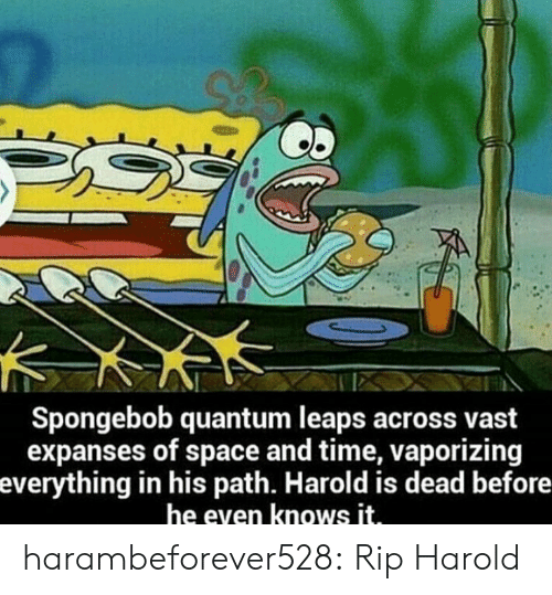 Vast Expanses: Spongebob quantum leaps across vast  expanses of space and time, vaporizing  everything in his path. Harold is dead before  he even knows it. harambeforever528:  Rip Harold