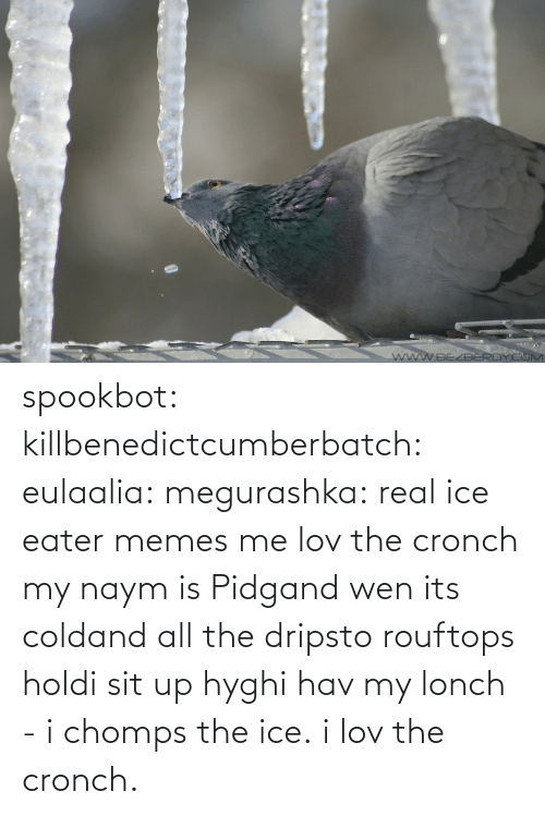 Memes, Tumblr, and Blog: spookbot: killbenedictcumberbatch:  eulaalia:  megurashka: real ice eater memes me  lov the cronch  my naym is Pidgand wen its coldand all the dripsto rouftops holdi sit up hyghi hav my lonch - i chomps the ice. i lov the cronch.