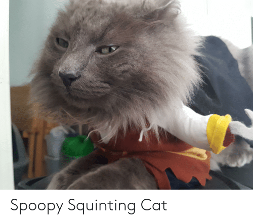 Squinting: Spoopy Squinting Cat