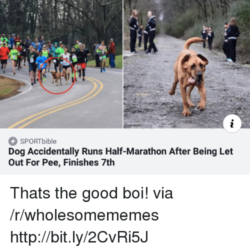 Good, Http, and Boi: SPORTbible  Dog Accidentally Runs Half-Marathon After Being Let  Out For Pee, Finishes 7th Thats the good boi! via /r/wholesomememes http://bit.ly/2CvRi5J
