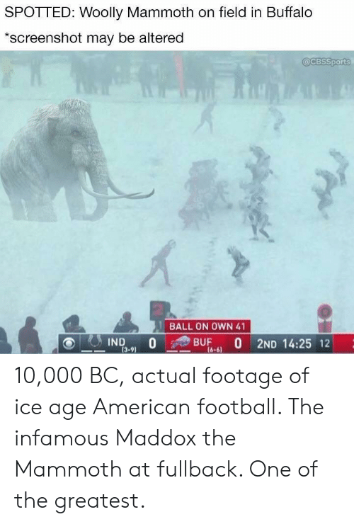 SPOTTED Woolly Mammoth on Field in Buffalo *Screenshot May