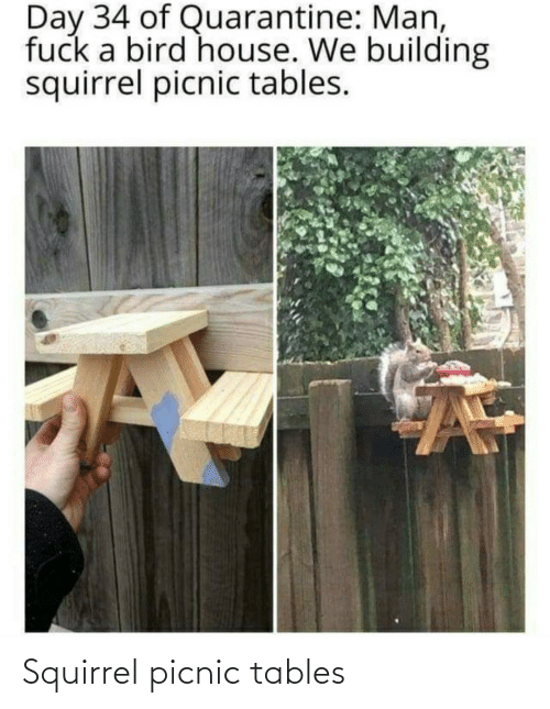 tables: Squirrel picnic tables