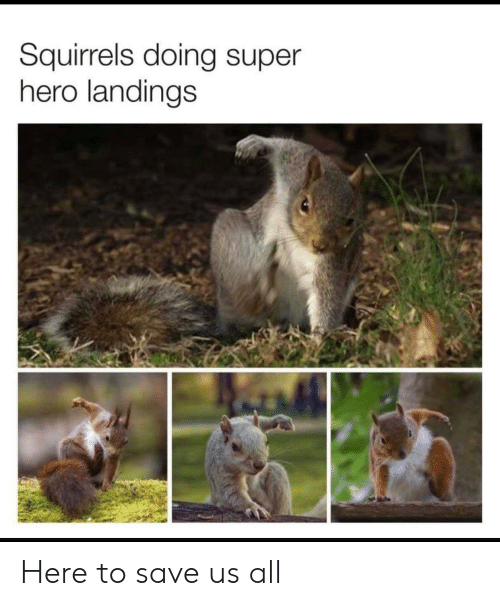 Hero, Super, and Super Hero: Squirrels doing super  hero landings Here to save us all