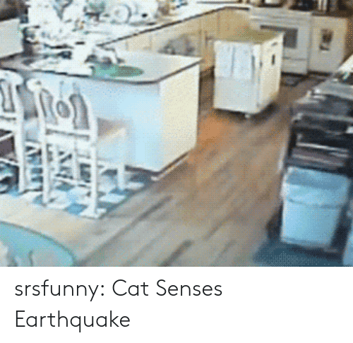 Tumblr, Blog, and Earthquake: srsfunny:  Cat Senses Earthquake