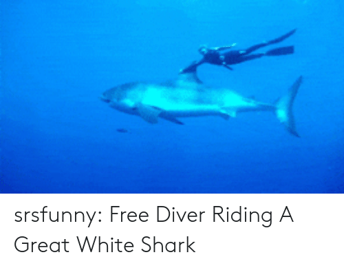 Tumblr, Shark, and Blog: srsfunny:  Free Diver Riding A Great White Shark