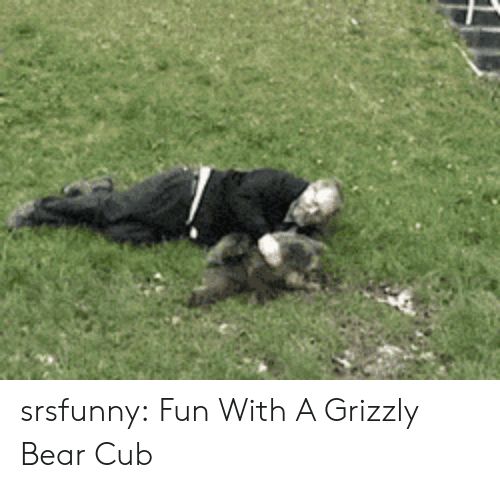Tumblr, Bear, and Blog: srsfunny:  Fun With A Grizzly Bear Cub