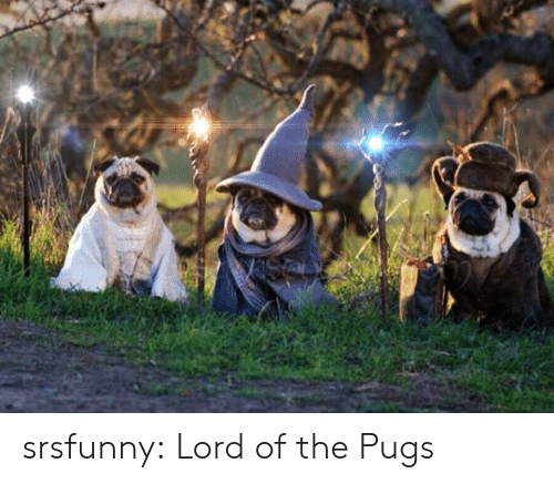 Tumblr, Blog, and Http: srsfunny:  Lord of the Pugs
