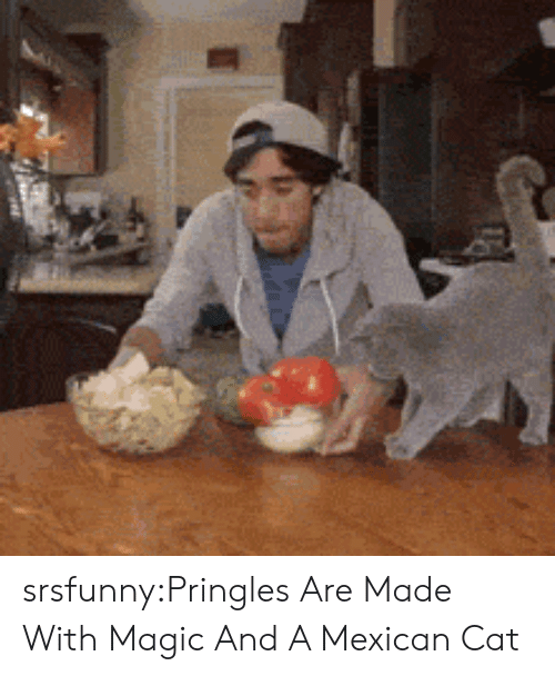 mexican cat: srsfunny:Pringles Are Made With Magic And A Mexican Cat