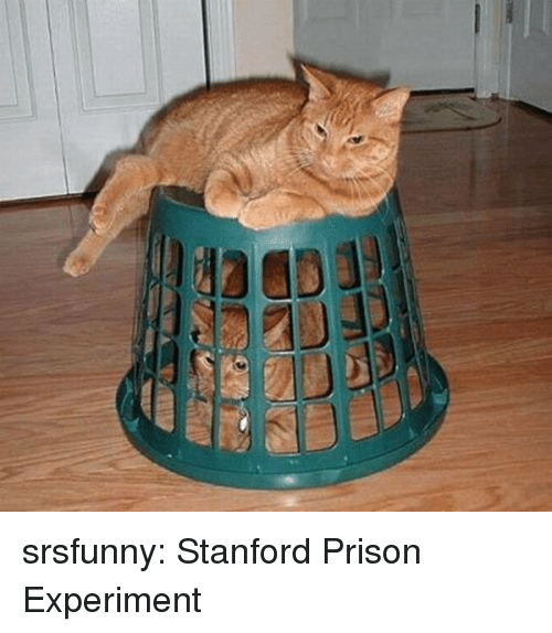 Stanford: srsfunny: Stanford Prison Experiment