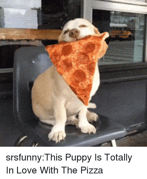 Love, Pizza, and Tumblr: srsfunny:This Puppy Is Totally In Love With The Pizza