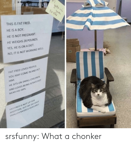 what: srsfunny:  What a chonker