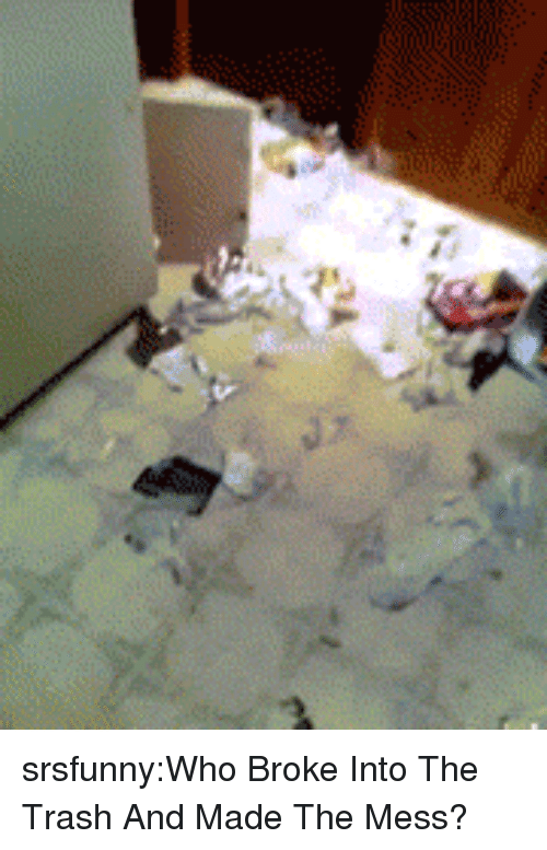 Trash, Tumblr, and Blog: srsfunny:Who Broke Into The Trash And Made The Mess?