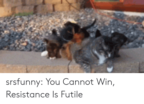 Tumblr, Blog, and Http: srsfunny:  You Cannot Win, Resistance Is Futile