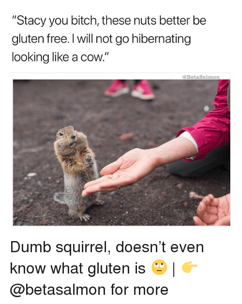 "Bitch, Dumb, and Memes: ""Stacy you bitch, these nuts better be  gluten free. I will not go hibernating  looking like a cow.""  BetaSalmon Dumb squirrel, doesn't even know what gluten is 🙄 