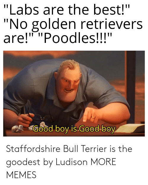 And: Staffordshire Bull Terrier is the goodest by Ludison MORE MEMES