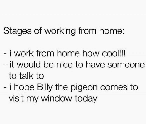 Work, Cool, and Home: Stages of working from home:  i work from home how cool!  it would be nice to have someone  to talk to  i hope Billy the pigeon comes to  visit my window today