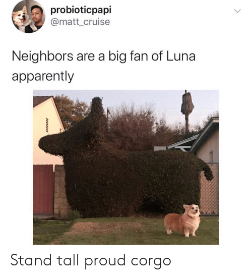 stand: Stand tall proud corgo