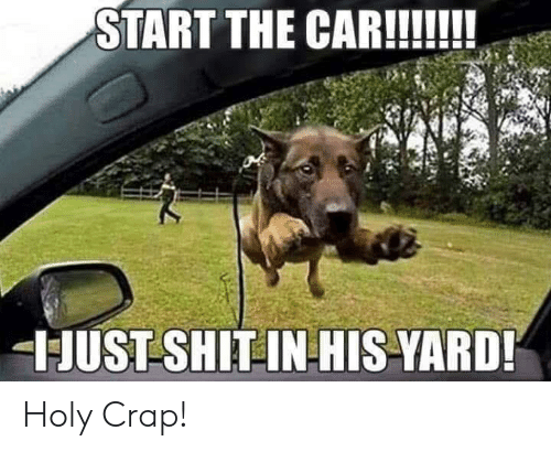 holy crap: START THE CAR!!  JUST SHIT INHIS-YARD! Holy Crap!