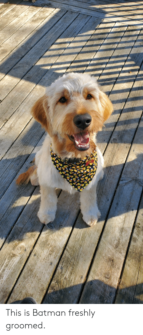 Batman, This, and This Is: STATE This is Batman freshly groomed.