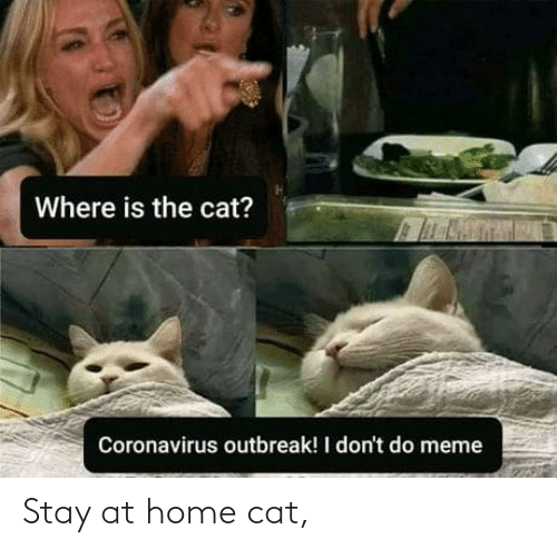 Stay At Home: Stay at home cat,