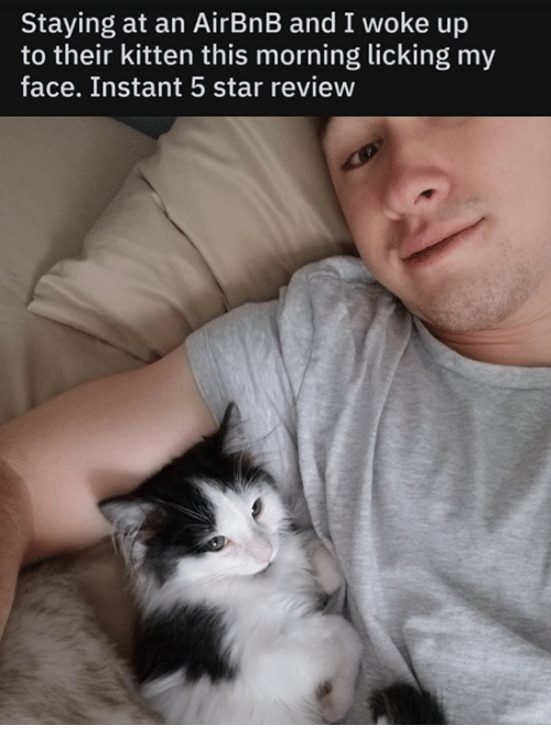 Memes, Airbnb, and Star: Staying at an AirBnB and I woke up  to their kitten this morning licking my  face. Instant 5 star review