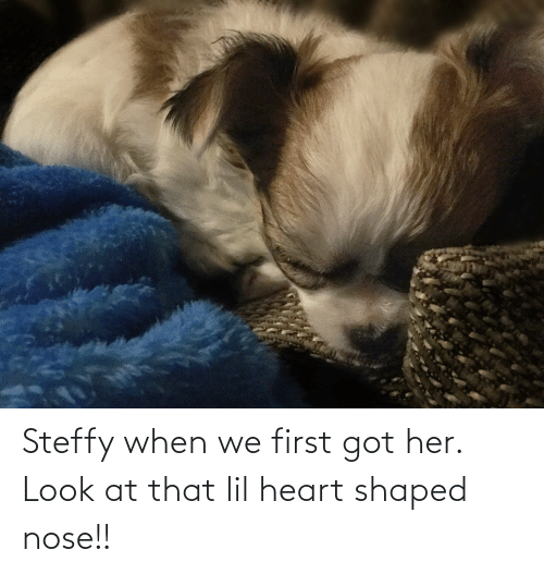Aww Memes: Steffy when we first got her. Look at that lil heart shaped nose!!