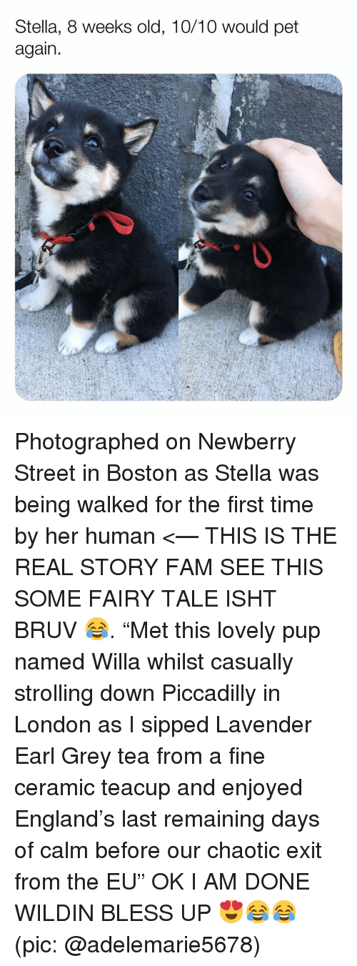 "stella: Stella, 8 weeks old, 10/10 would pet  again Photographed on Newberry Street in Boston as Stella was being walked for the first time by her human <— THIS IS THE REAL STORY FAM SEE THIS SOME FAIRY TALE ISHT BRUV 😂. ""Met this lovely pup named Willa whilst casually strolling down Piccadilly in London as I sipped Lavender Earl Grey tea from a fine ceramic teacup and enjoyed England's last remaining days of calm before our chaotic exit from the EU"" OK I AM DONE WILDIN BLESS UP 😍😂😂 (pic: @adelemarie5678)"