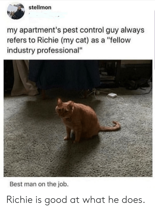 "At What: stellmon  my apartment's pest control guy always  refers to Richie (my cat) as a ""fellow  industry professional""  Best man on the job. Richie is good at what he does."