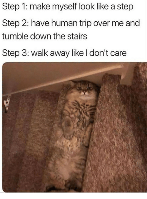 Human, Step, and Down: Step 1: make myself look like a step  Step 2: have human trip over me and  tumble down the stairs  Step 3: walk away like I don't care