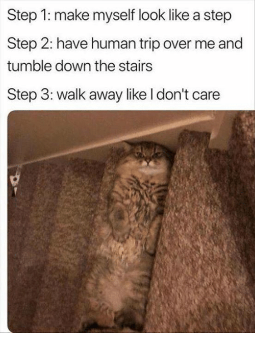Relationships, Human, and Step: Step 1: make myself look like a step  Step 2: have human trip over me and  tumble down the stairs  Step 3: walk away like I don't care
