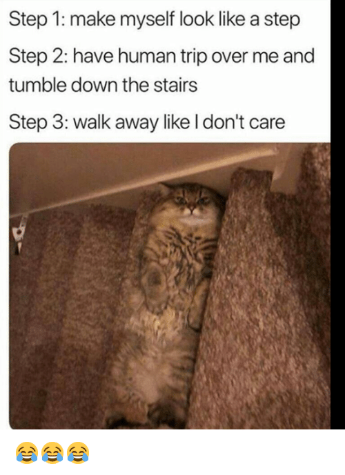Grumpy Cat, Human, and Step: Step 1: make myself look like a step  Step 2: have human trip over me and  tumble down the stairs  Step 3: walk away like l don't care 😂😂😂