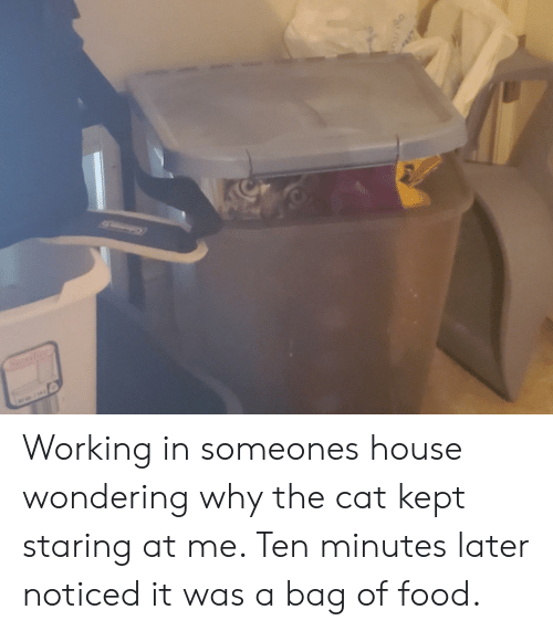 Food, House, and Cat: Sterilite Working in someones house wondering why the cat kept staring at me. Ten minutes later noticed it was a bag of food.