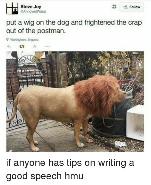 England, Tumblr, and Good: Steve Joy  Follow  GAnnoyedWasp  put a wig on the dog and frightened the crap  out of the postman.  9 Wokingham, England  ta if anyone has tips on writing a good speech hmu