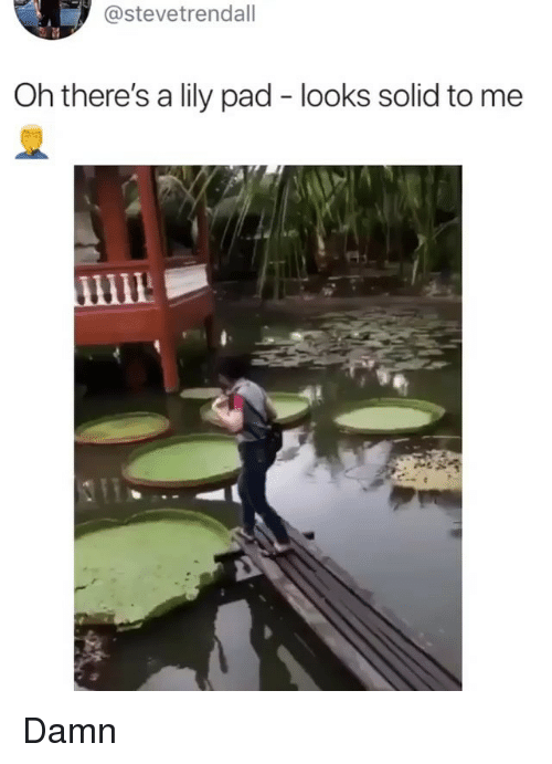 Memes, 🤖, and Pad: @stevetrendall  Oh there's a lily pad - looks solid to me Damn