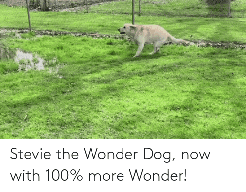 Wonder: Stevie the Wonder Dog, now with 100% more Wonder!