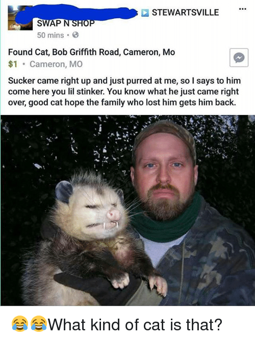 Family, Memes, and Lost: STEWARTSVILLE  SWAP  N  50 mins  B  Found Cat, Bob Griffith Road, Cameron, Mo  $1  Cameron, MO  came right up and just purred at me, so I says to him  come here you stinker. You know what he just came right  over, good cat hope the family who lost him gets him back. 😂😂What kind of cat is that?